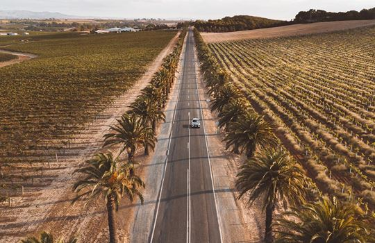 Top 5 things to do in the Barossa