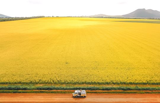 Coulta canola fields, Eyre Peninsula