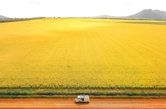 Coulta canola fields Eyre Peninsula