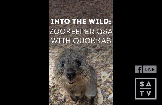 Facebook Live with Adelaide Zoo