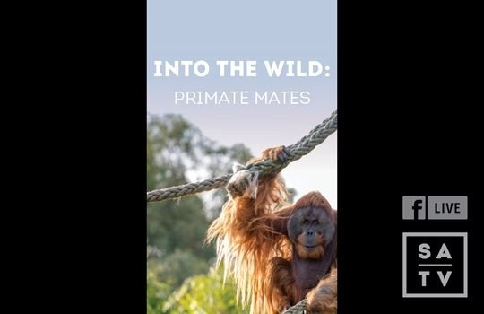 Facebook Live with Adelaide Zoo Primates