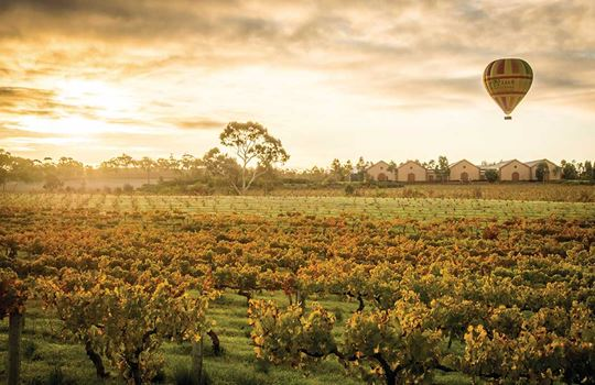 Hot Air Ballooning, Barossa