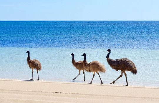 Coffin Bay National Park Eyre Peninsula EMUS
