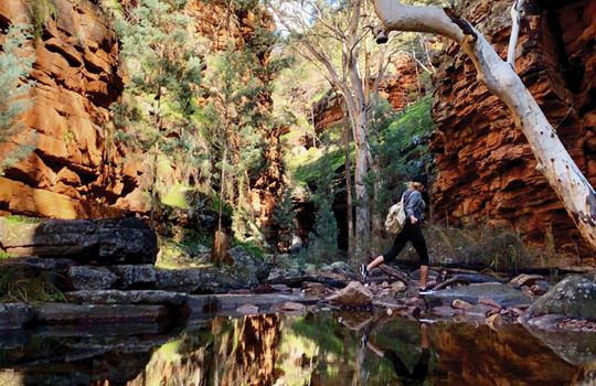 Alligator Gorge Flinders Ranges  Outback