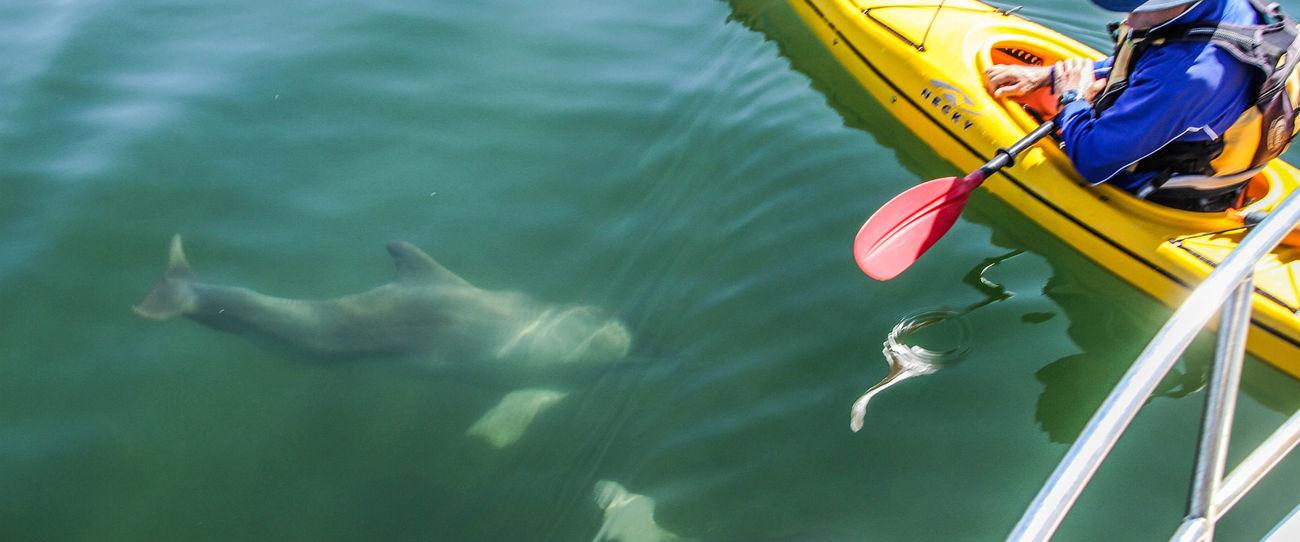 Adelaide Dolphin Sanctuary, Adelaide